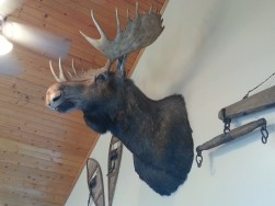 Morty the Moose