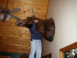 Jimmy and the Moose